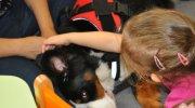 dogoterapia-motylex2014